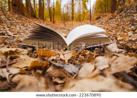 Nature with object Background of opened book with landscape - lying in autumn park on yellow and orange dry leaves on sunset sky and fall forest backdrop Empty copy space for inscription  - stock photo