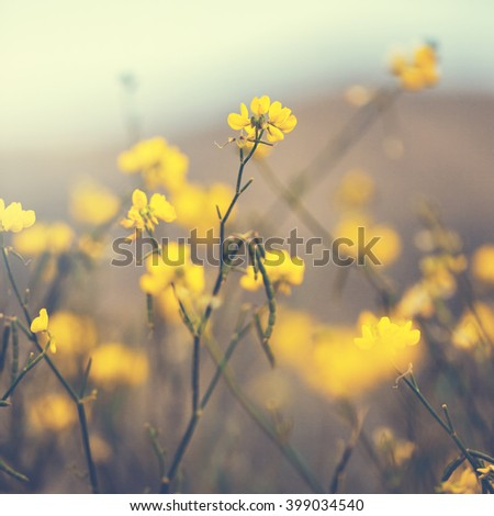 nature yellow vintage flowers - stock photo