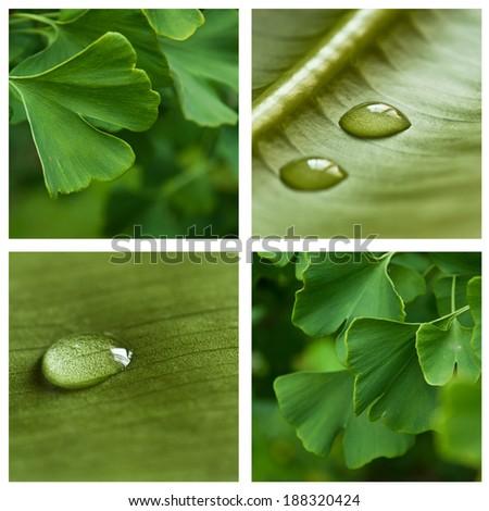 nature zen ginkgo collage - stock photo