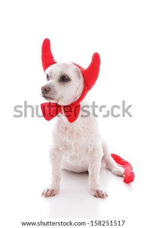 Naughty devil dog in costume horns and tail.  White background.