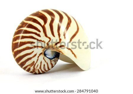 Nautilus - stock photo