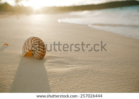 nautilus sea shell on golden sand beach with waves in  soft sunset light, shallow dof - stock photo