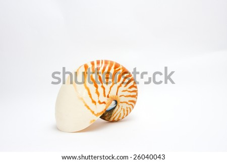 Nautilus Seashell - isolated on white