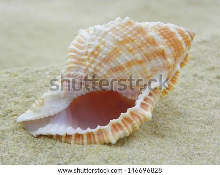 Nautilus Shell - stock photo