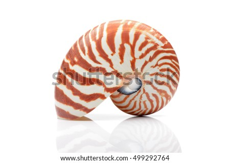 Nautilus shell isollated on white background with relfection