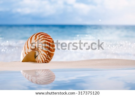 nautilus shell on white sandy beach sand under the sun light, shallow dof - stock photo