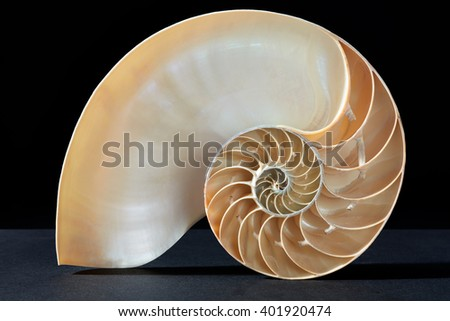 Nautilus shell, perfect Fibonacci pattern on black, clipping path included - stock photo