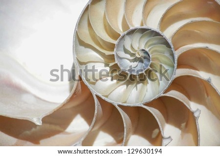 nautilus shell section - stock photo