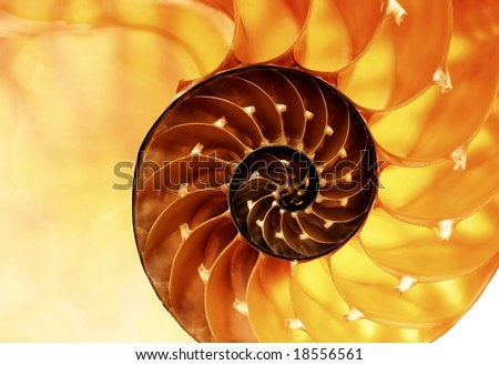 nautilus shell section as background - stock photo