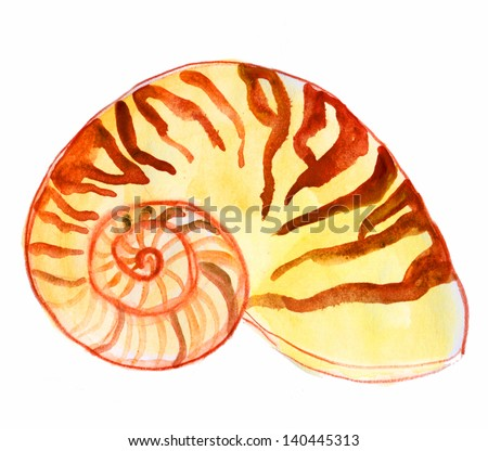 nautilus shell. watercolor