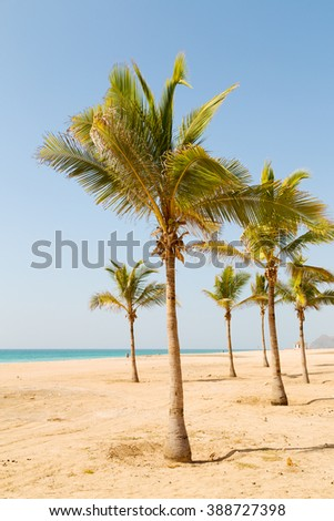 near sandy beach sky  palm   and mountain in oman arabic sea  the hill  - stock photo