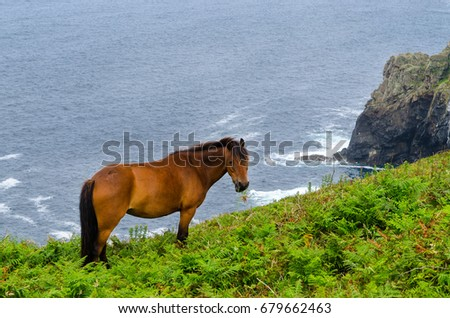 near trevean penwith cornwall ponies allowed stock photo royalty