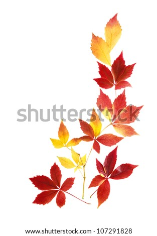 Neat arrangement of beautiful autumn leaves on white background - stock photo