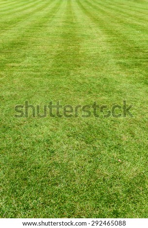 Neat manicured green turf, lawn or grass background with mowing lines and texture receding into the distance, vertical orientation - stock photo