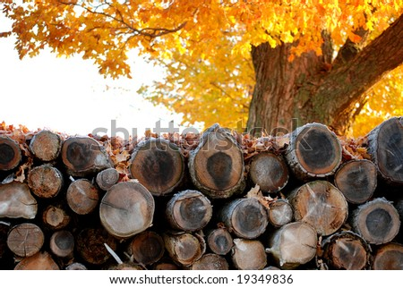 Neatly stacked pile of logs resting under a tree in late Autumn