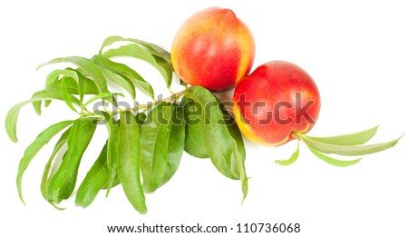 Nectarines and tree branch with leaves isolated on a white background - stock photo