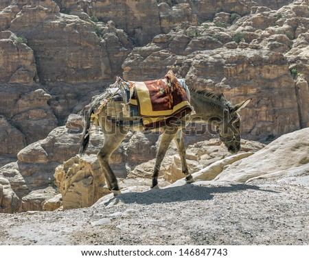 Neddy which rolled tourists visiting the ancient city of Petra (Treasury, el Khazneh) - Jordan