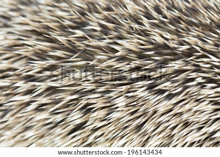 needle hedgehog texture