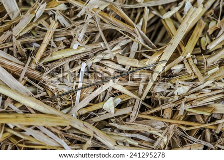Needle in Haystack - stock photo