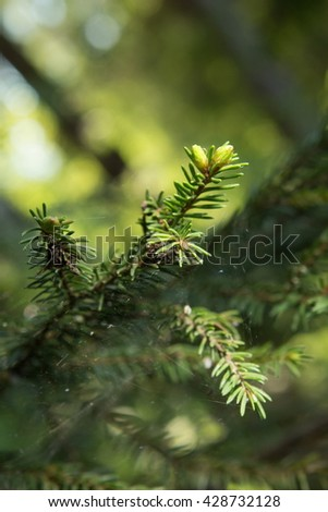 needles nettle leaves moss mountain ash trees flowers forest - stock photo
