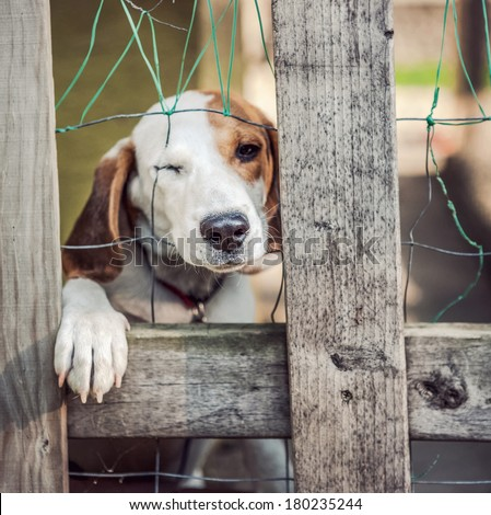 Neglected dog behind fence (shallow focus) - stock photo