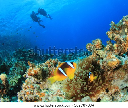Nemo Fish and couple scuba diving - stock photo