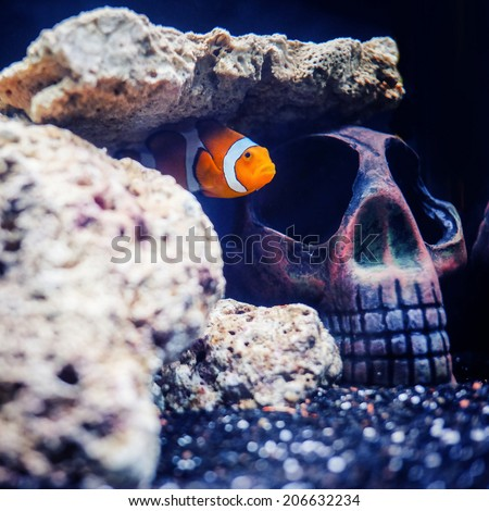 Nemo fish in the hidden skull