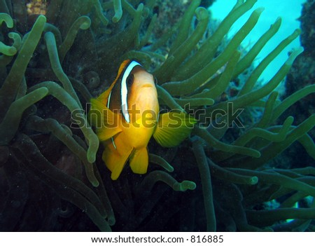 Nemo is found #2 - stock photo