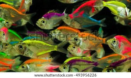 Neon Fish Stock Shutterstock #0: stock photo neon fish