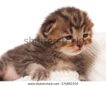 Neonate kitten on a warm knitted scarf over white background