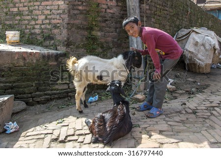 NEPAL, BHAKTAPUR - NOVEMBER, 2014: Little Nepalese boy posing with goats near to Bhaktapur Durbar square