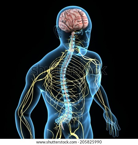 Nervous System - stock photo