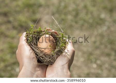 Nest Egg. - stock photo