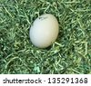 Nest Egg; a single white egg laid snugly in a soft, secure nest of shredded paper money. - stock photo
