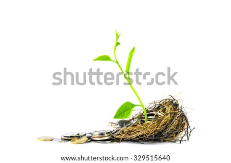 Nest Full of Money for Savings and small tree growth in nest con - stock photo