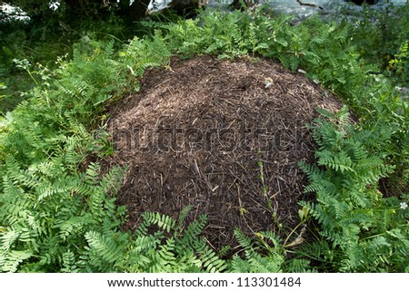 nest of ants in nature - stock photo