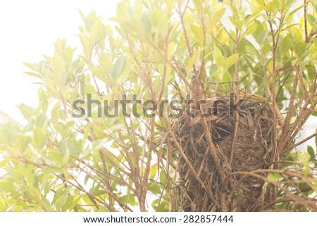 Nest on tree with light  - stock photo