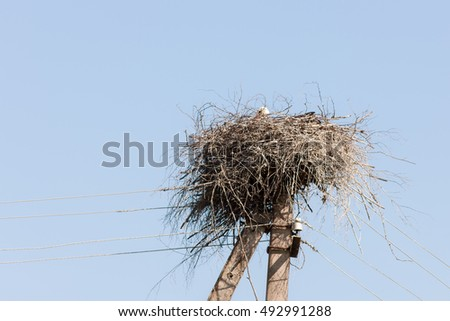 nest with a stork on electric pole
