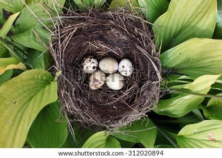 Nest with egg of wild bird outdoors - stock photo