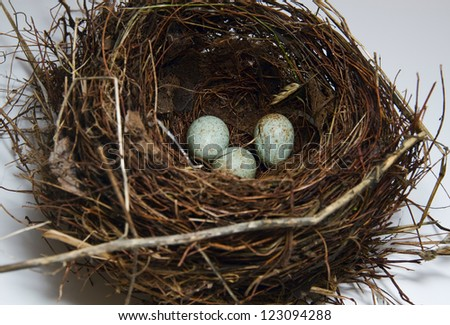 Nest with egg on white background