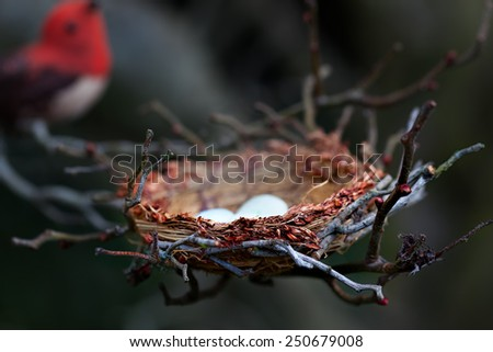 Nest with eggs in a tree. Red bird in the background. Selective focus and lighting on the nest and foreground twigs. - stock photo