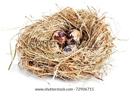 Nest with four eggs isolated on white - stock photo