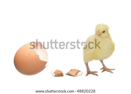 nestling and shell of eggshell on white background