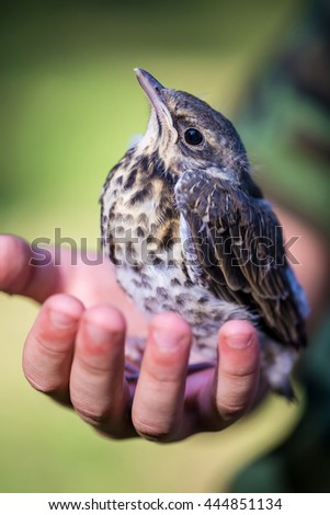 Nestling in the hands