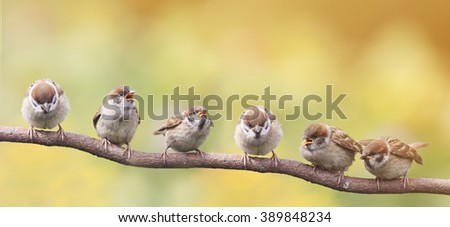 nestlings of a Sparrow sitting on a tree branch revealing the little beaks waiting for food - stock photo