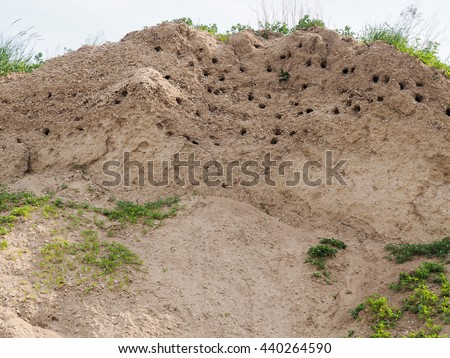 Nests of swallows in the sand slope - stock photo