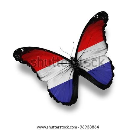 Netherlandish flag butterfly, isolated on white - stock photo