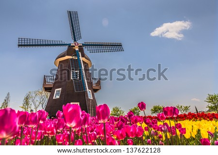 Netherlands field - stock photo
