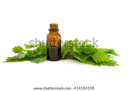nettle essence in a bottle and fresh branches with leaves isolated with shadows on a white background, medicinal herb for health and beauty, selected focus, narrow depth of field - stock photo