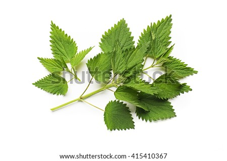 Nettle fresh green leaves on a white background.